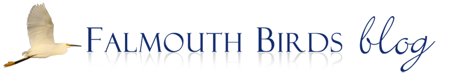 Falmouth Birds Logo